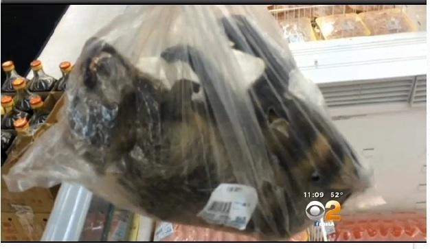 【命の値段】サーバルちゃん128万円、フェネック75万円、アライさん3000円 [無断転載禁止]©2ch.net [202859999]YouTube動画>10本 ->画像>177枚